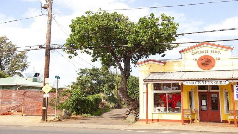 新たな魅力も備える古き良きオールドタウン パイア/Paia