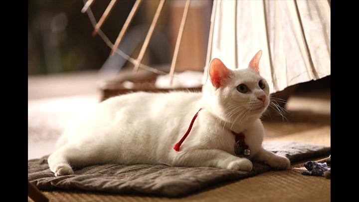 ドラマ「猫侍」のあらすじ・ストーリー
