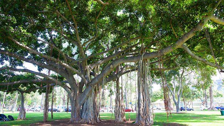 ハワイ最大の敷地を誇るローカル憩いの場 カピオラニ公園/Kapiolani Park