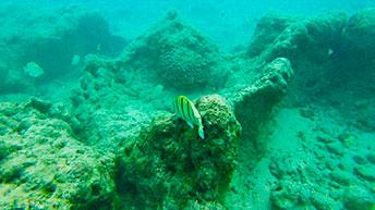 美しいサンゴ礁と魚の姿を満喫!