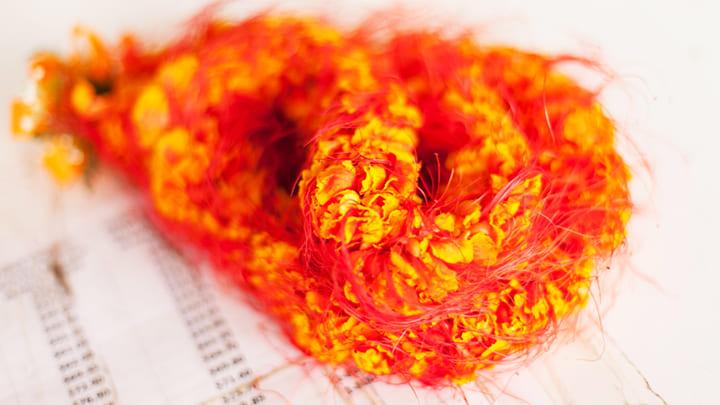 ハイビスカスに似た高貴な花「イリマ」